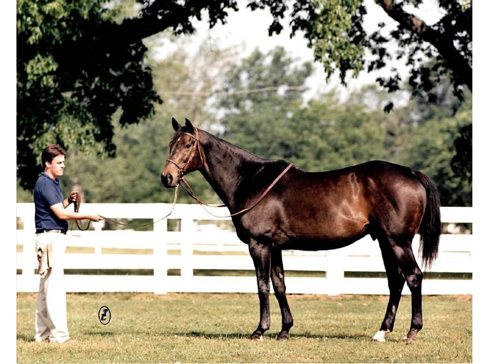 Forego Kentucky Horse Park