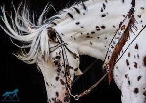Breeds Info | Kentucky Horse Park