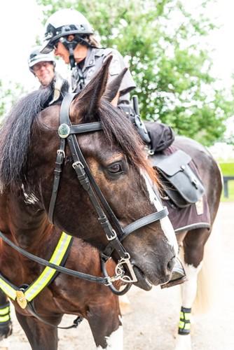 2019 Celebration Horse Oliver Kentucky Horse Park